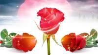 Rose玫瑰玫瑰花配乐成品