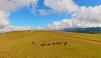 云南美丽自然风景高清实拍视频素材
