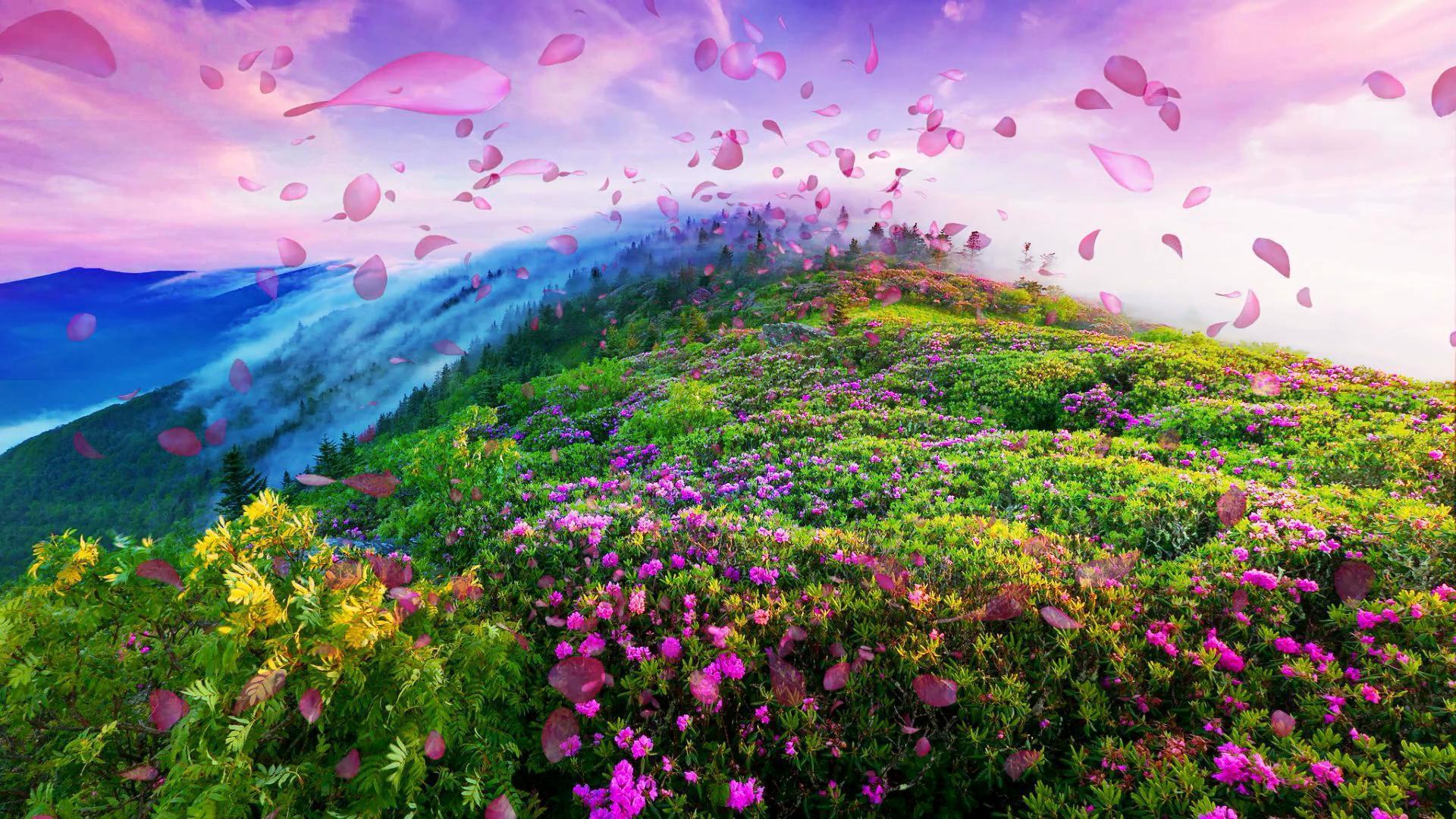 春天花瓣满山飞舞