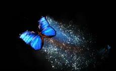 蝴蝶飞舞粒子光效舞台背景