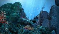 美丽的海底世界高清实拍视频素材