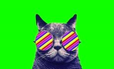 宠物猫绿幕