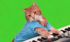 宠物猫弹琴抠像