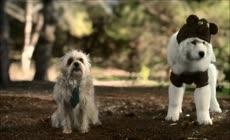 一群可爱宠物狗