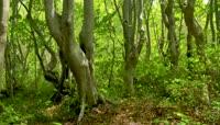 4K\-森林