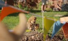 4k一群可爱的宠物小狗草地玩耍