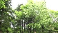 春天植物园