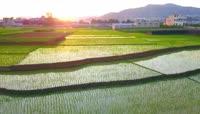 春耕播种稻田实拍视频素材