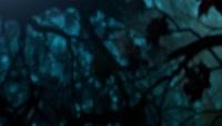 3D动画森林