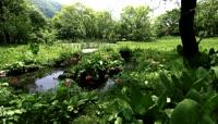 箱根湿地公园