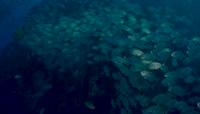 4K\-海底世界