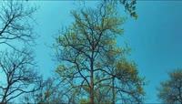 风景\-树林\-树木\-草\-山