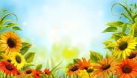 清新自然植物鲜花LED背景视频