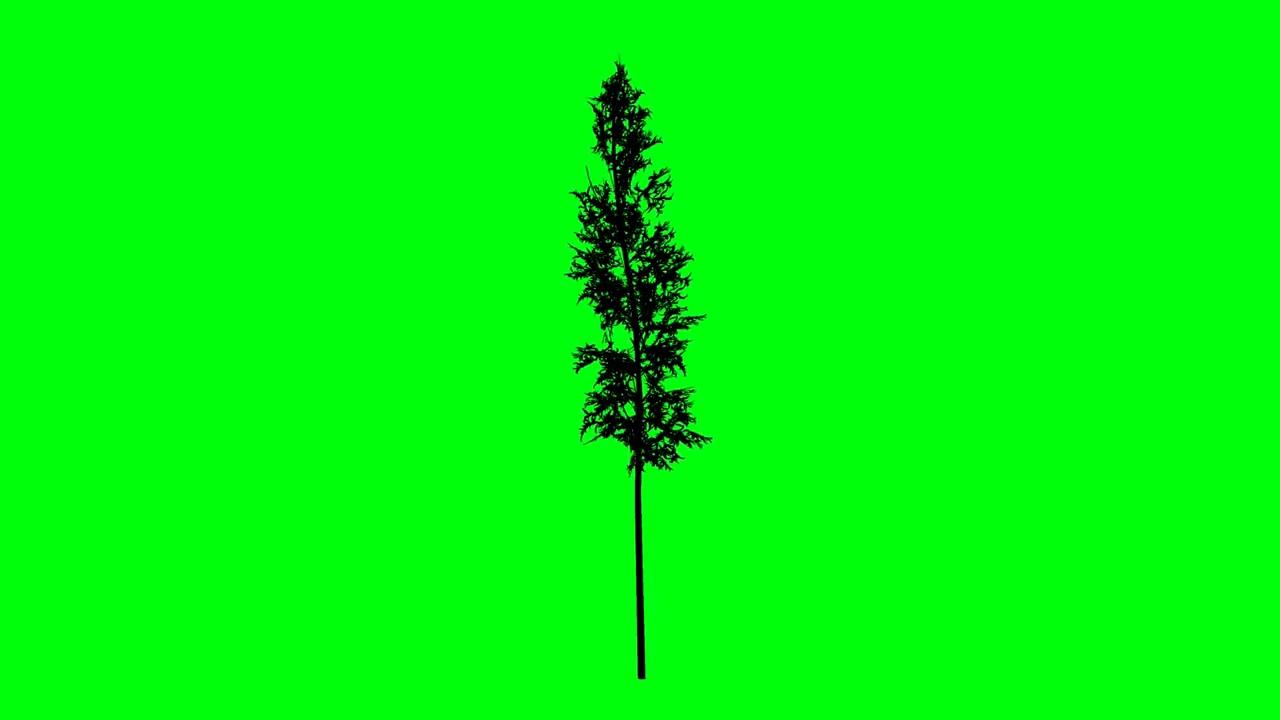 绿屏抠像竹屏树剪影
