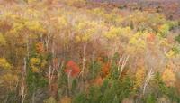 秋天森林航拍视频素材