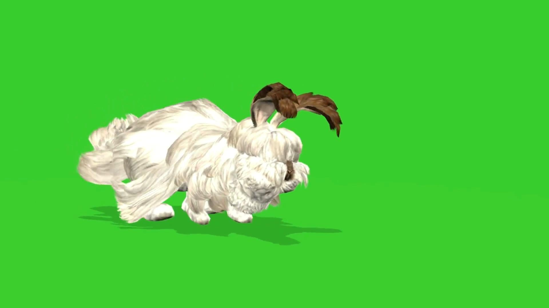 绿屏抠像卡通白色兔子