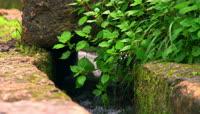 清澈的溪流小草苔藓4K视频素材