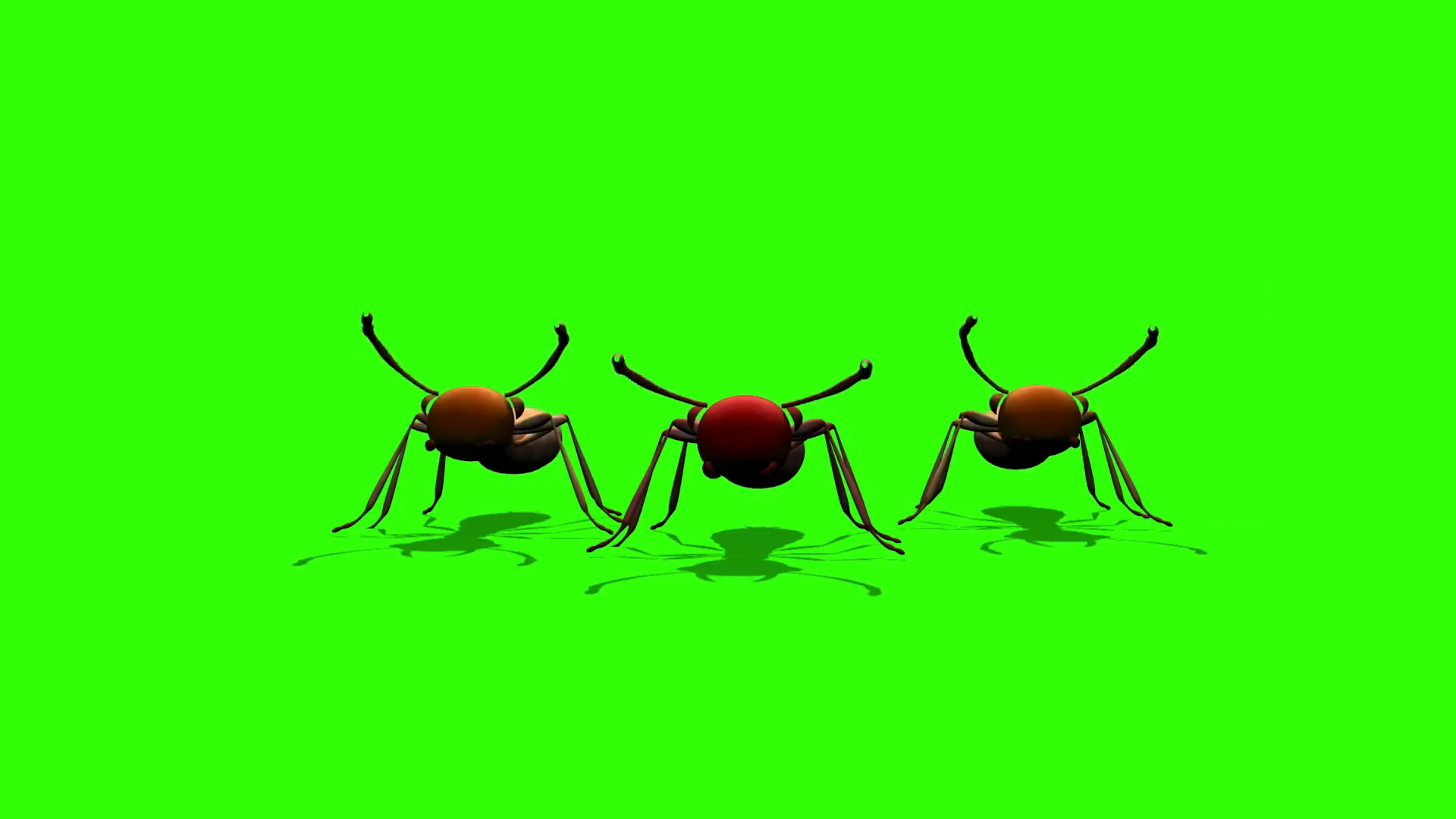 绿屏抠像卡通彩色蚂蚁