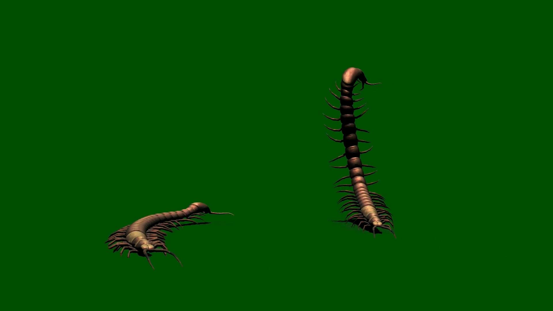 绿屏抠像爬行的蜈蚣